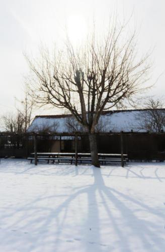 Réveil sous la neige